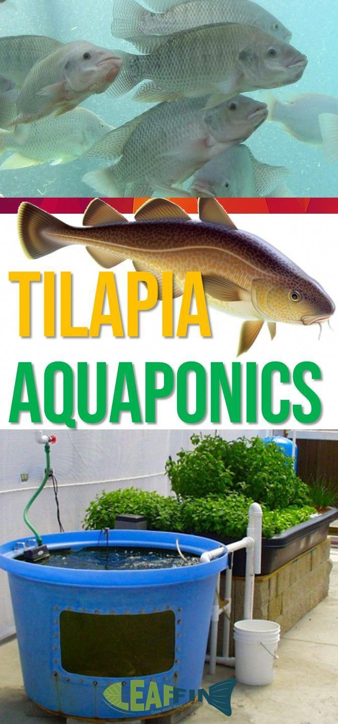 Jubilant aquaponic in your backyard Contact Sales ...