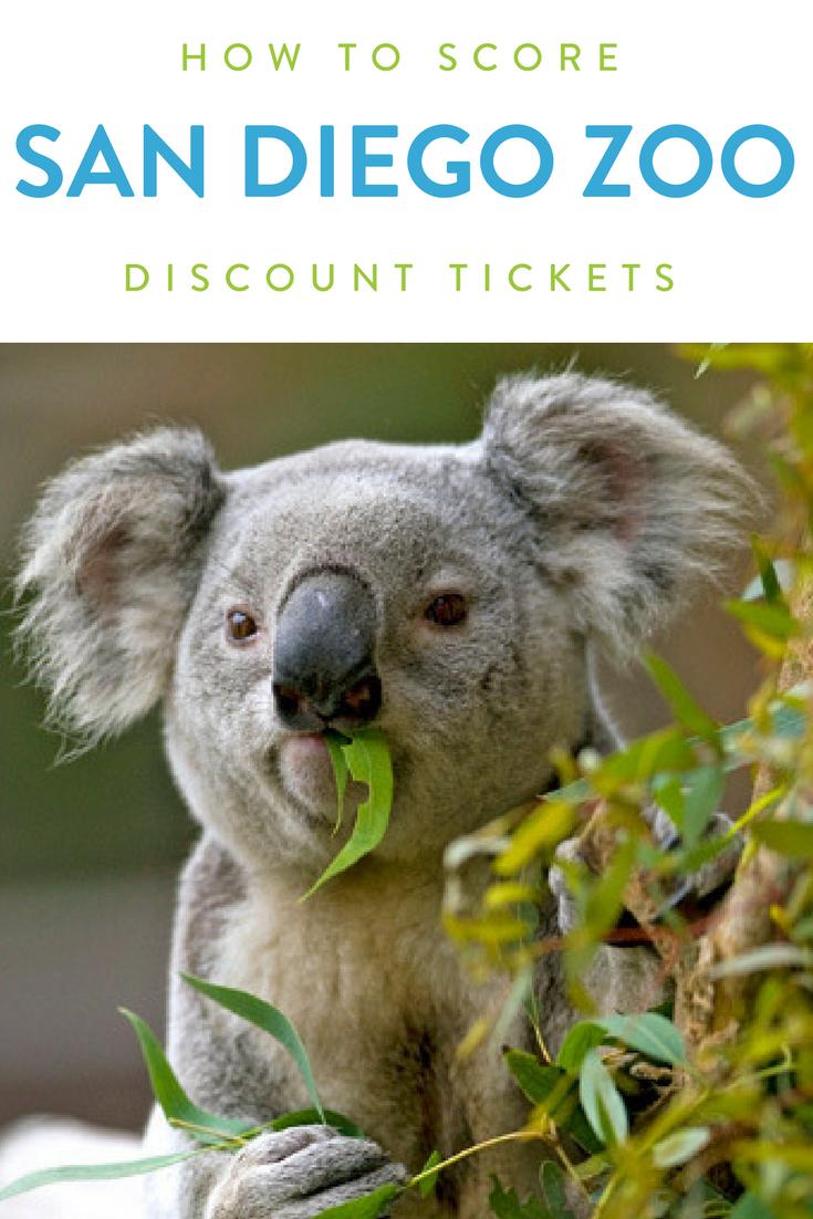 How To Save Money With San Diego Zoo Discount Tickets Cute Koala Bear Koala Bear Koala