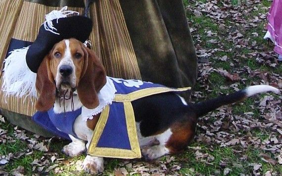 Reserved Three 3 Musketeer Dog Pet Costume Outfit By Mattionline