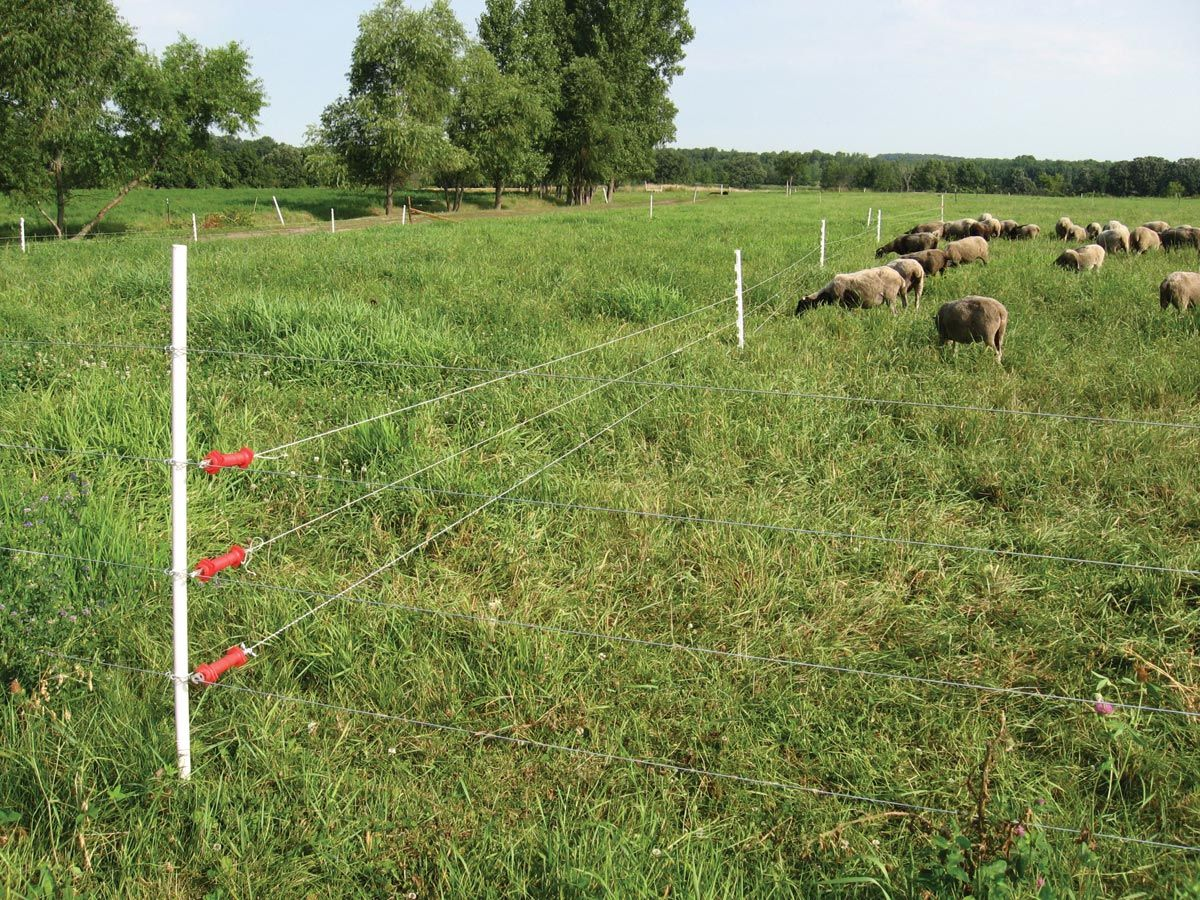 Electric Fencing Basics Homesteading Info Pinterest Fence Farmer Friendly Solar Based Fencer For Rural Agriculture Cattle Sheep Farm