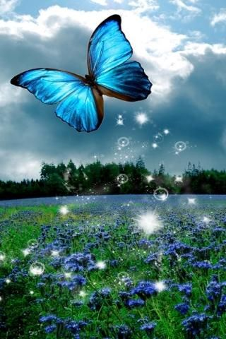 3D Butterfly Wallpaper