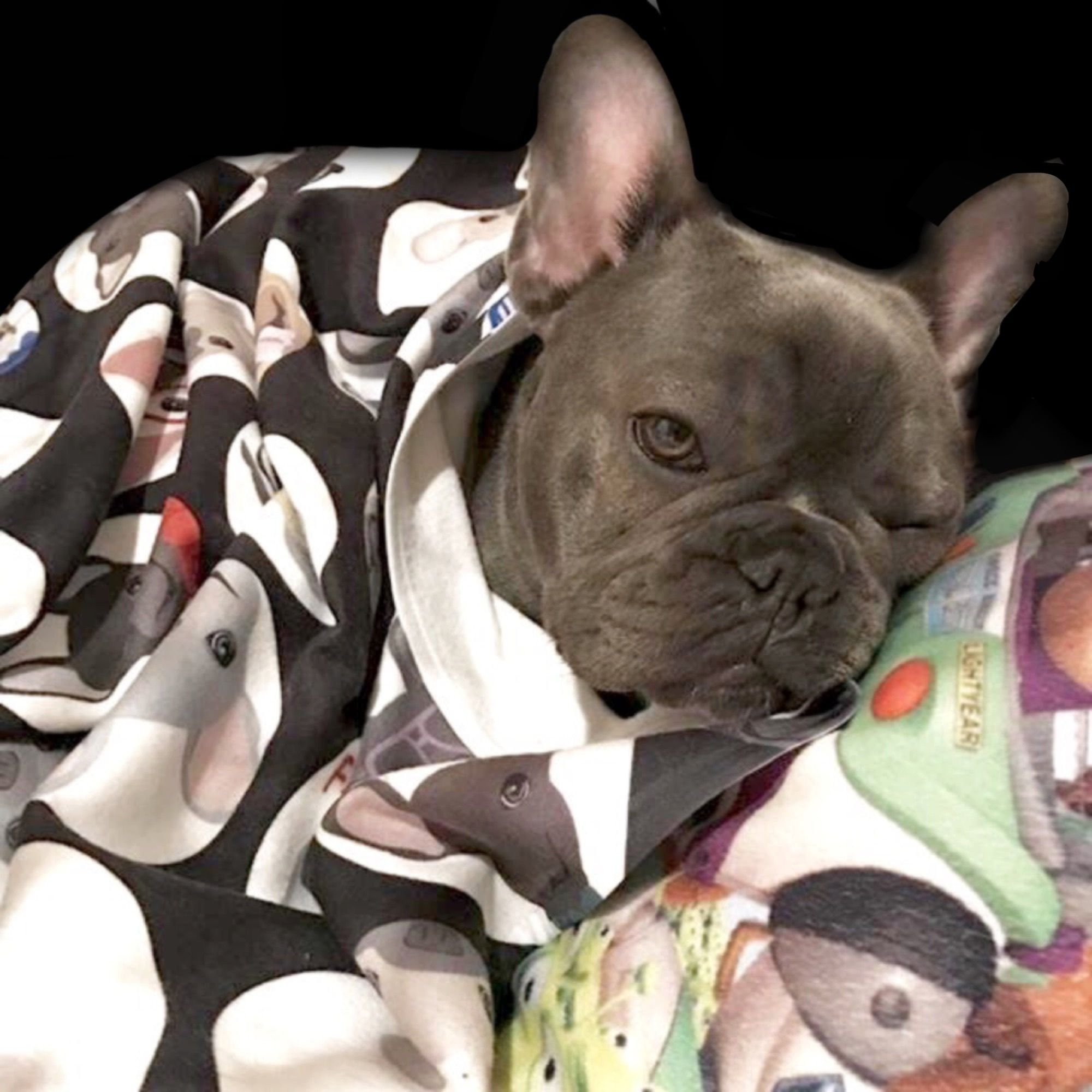 French Bulldog asleep on a Blanket from the Frenchie Store