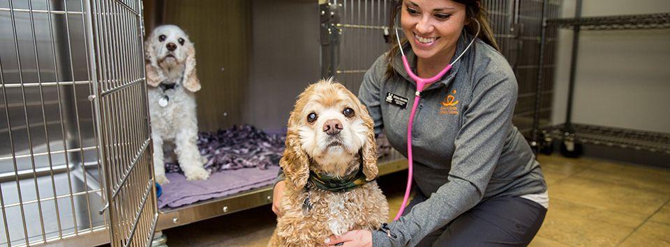 Best Friends Vet Access Emergency Vet Dogs Best Friends
