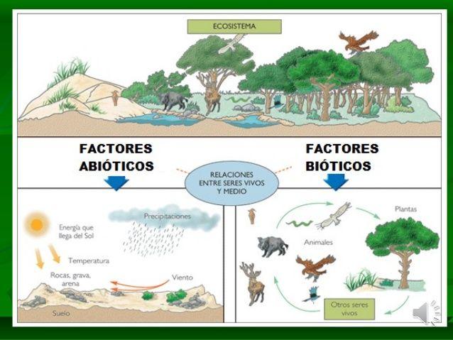Imagen Relacionada Ecosistemas Factores Bioticos Y Abioticos Ecosistema Terrestre Y Acuatico