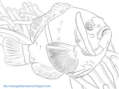 Aneka Gambar Mewarnai Gambar Mewarnai Ikan Di Laut Untuk Anak Paud Dan Tk Gambar Berikut Ini Ad