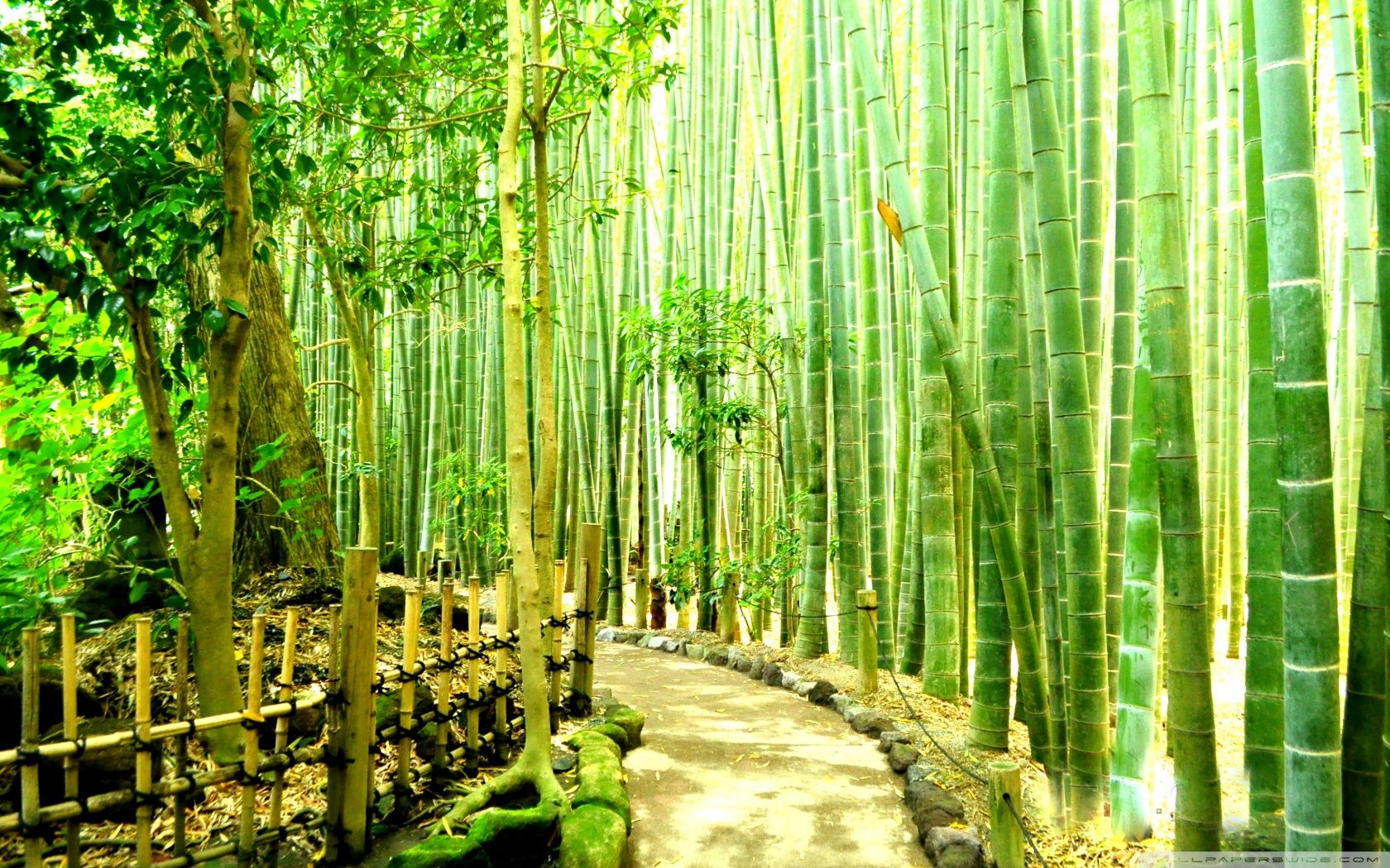Top 10 Things To Do In Tokyo Bamboo Wallpaper Bamboo Forest Japan Bamboo Tree