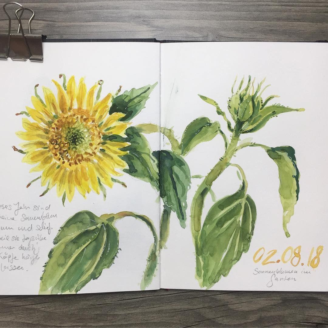 Sonnenblume In Aquarell Naturskizzenbuch Nature Journal
