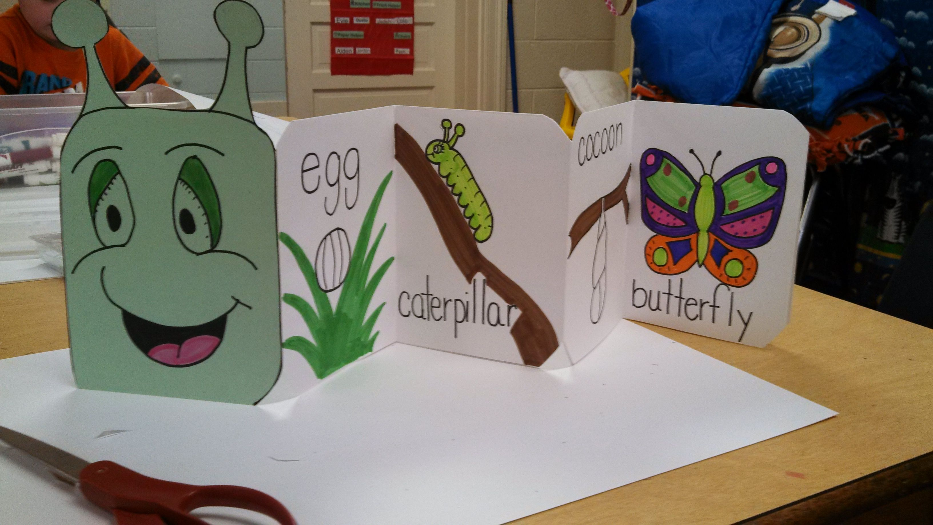 Caterpillar Life Cycle Book