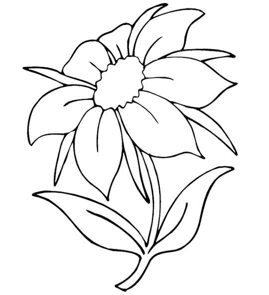 Pin On Flower Outlines