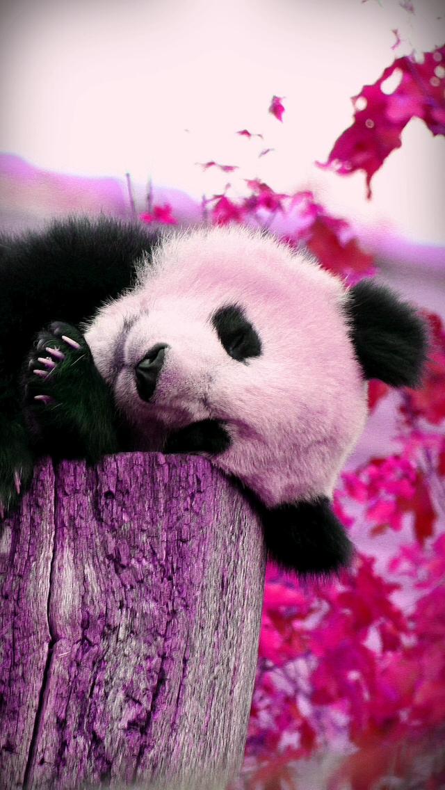 Giant Panda Wallpaper Bears Animals Wallpapers For Desktop