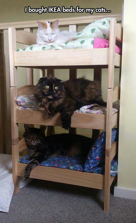Cama Para Gatos Diy Cat Bed Ikea Hacks For Cats Ikea Doll Bed
