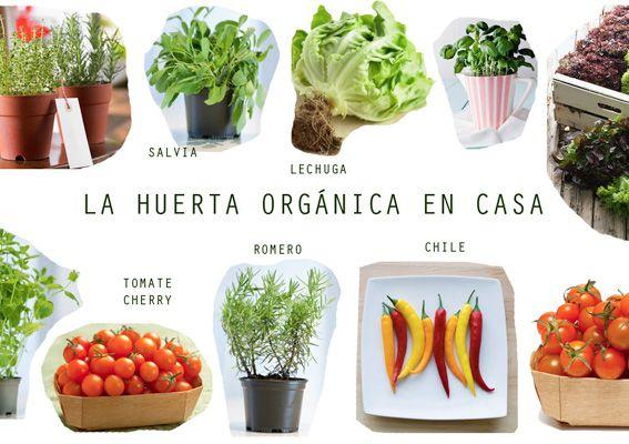 Te recomiendo leer esta nota: Cultivá tu propia mini huerta orgánica