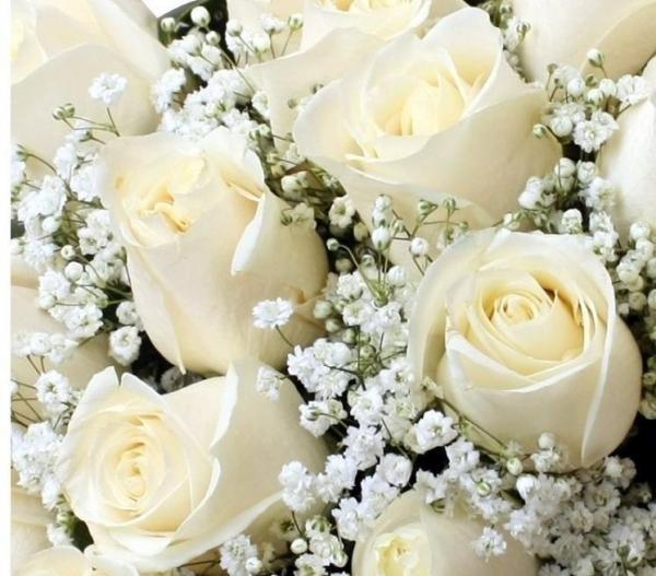 plantação de rosas brancas - Pesquisa Google