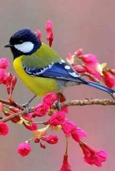 pretty bird (70 pieces jigsaw puzzle)