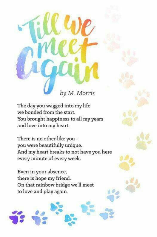 Til We Meet Again By M Morris The Day You Wagged Into My Life We