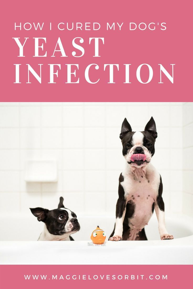 Home Remedy for Dog Skin Yeast Infection