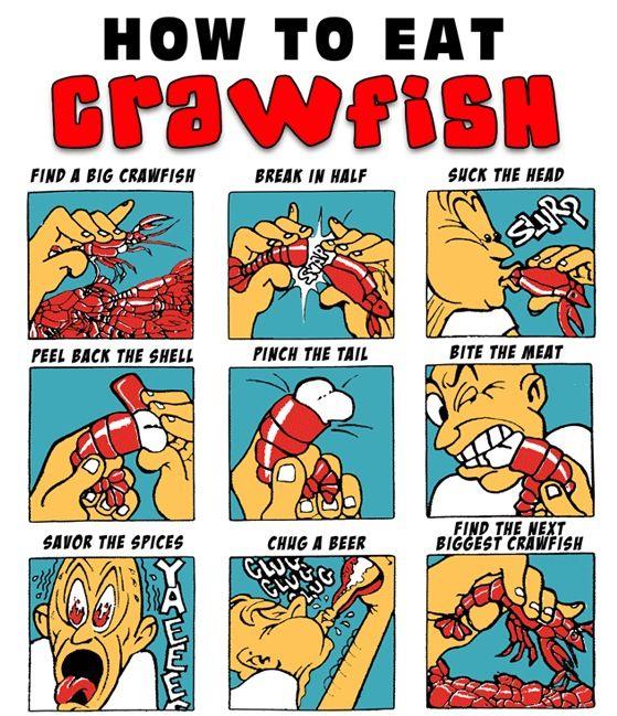 How to eat a crawfish | Funny Stuff! | Pinterest
