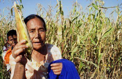 Mujeres de maiz, Mexico