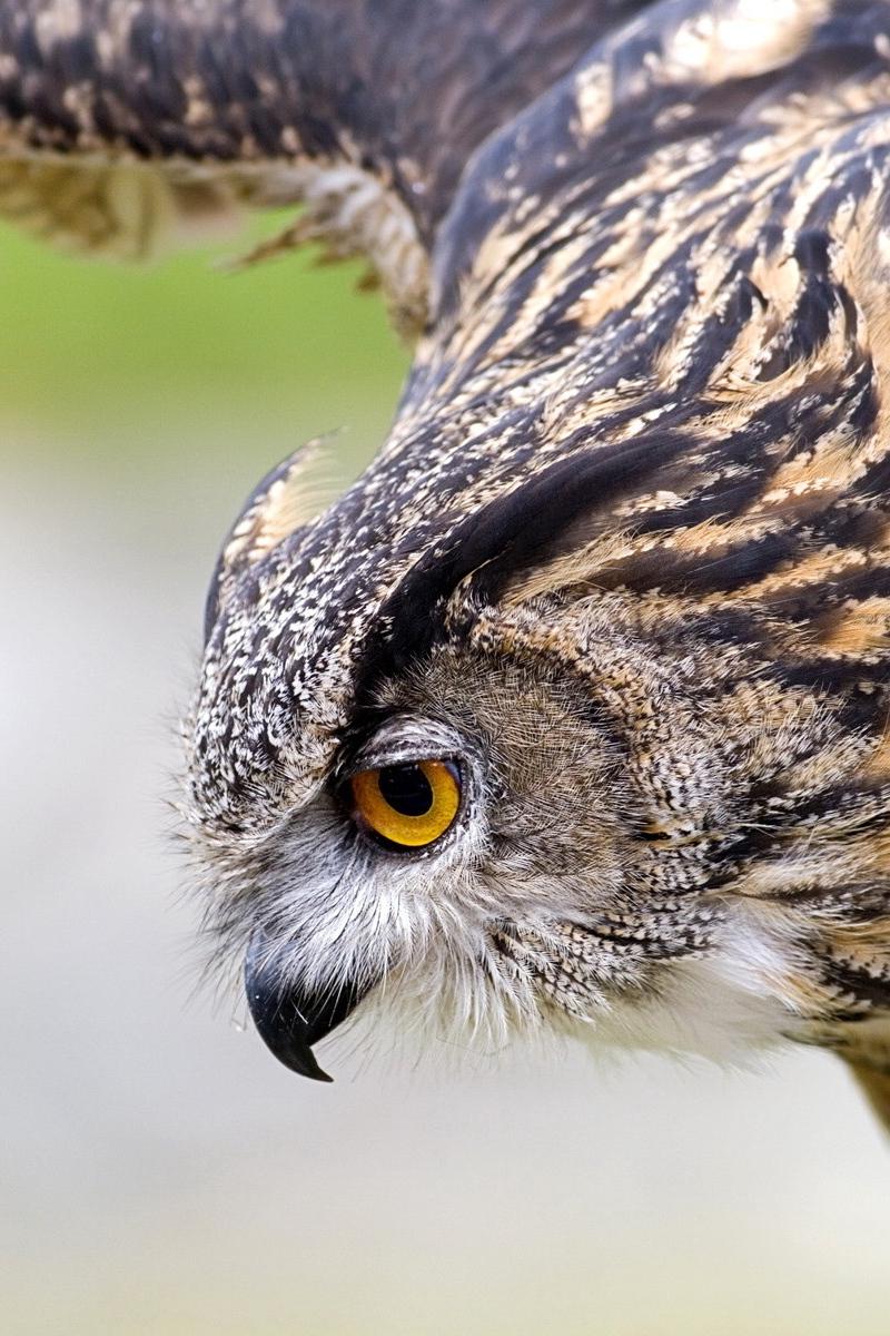 Pin by Anastasija Voloshchenko on птицы in 2020 Owl