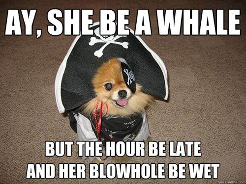 Must Be A Pirate Thing With Images Cute Dog Pictures Cute