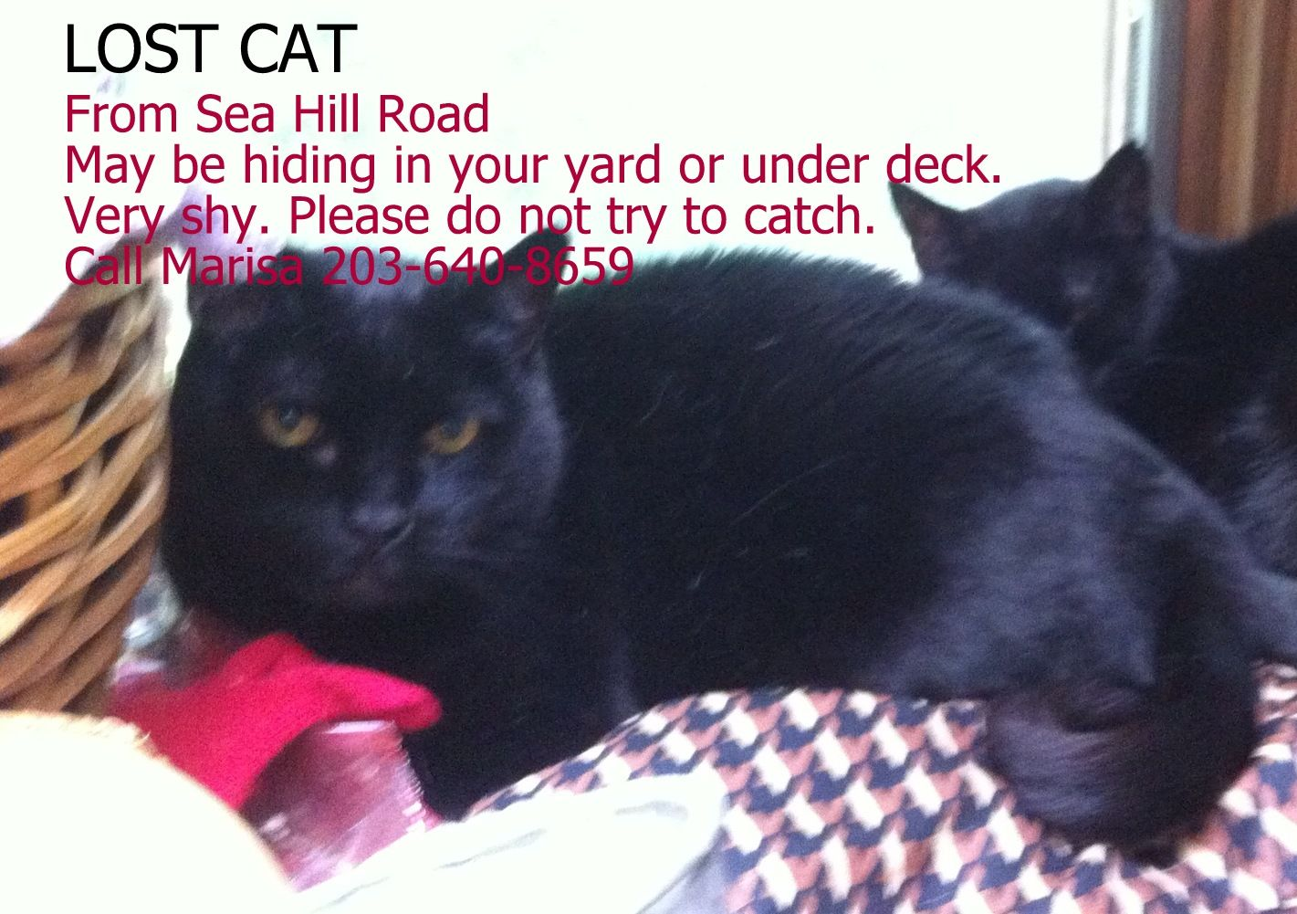 Lost Cat Connecticut Humane Society Cats Lost Cat Outdoor Cats
