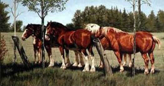 Colorful pictures of draught horses draft horse pictures your colorful pictures of draught horses draft horse pictures your best site for draft horses bud lighthorse aloadofball Choice Image