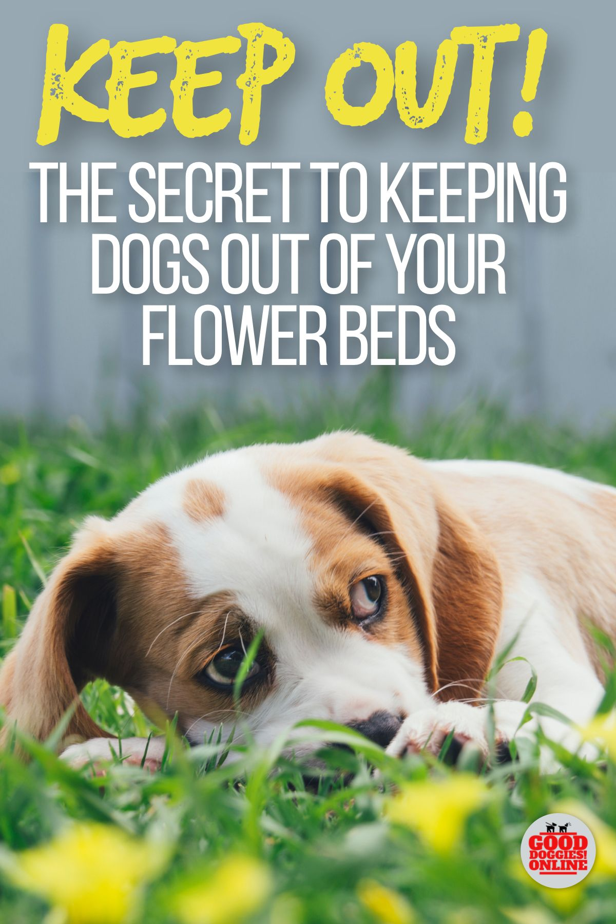 How to Keep Dogs Out of Garden & Flower Beds Dogs