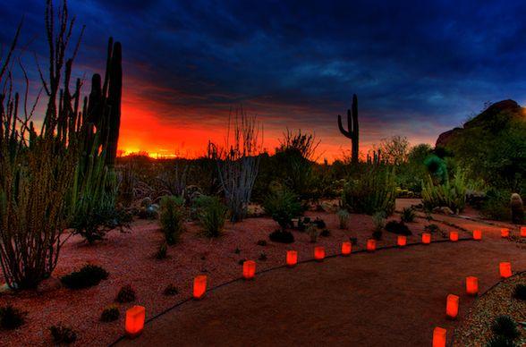 Las Noches De Las Luminarias At Desert Botanical Garden Desert