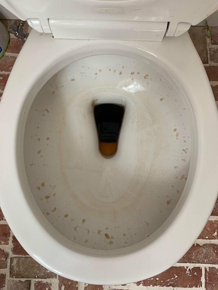 A Tutorial How To Change A Toilet Seat The Diy Playbook Toilet Seat Toilet Diy Bathroom