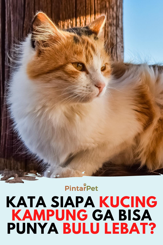 Pin Di Tips Kucing