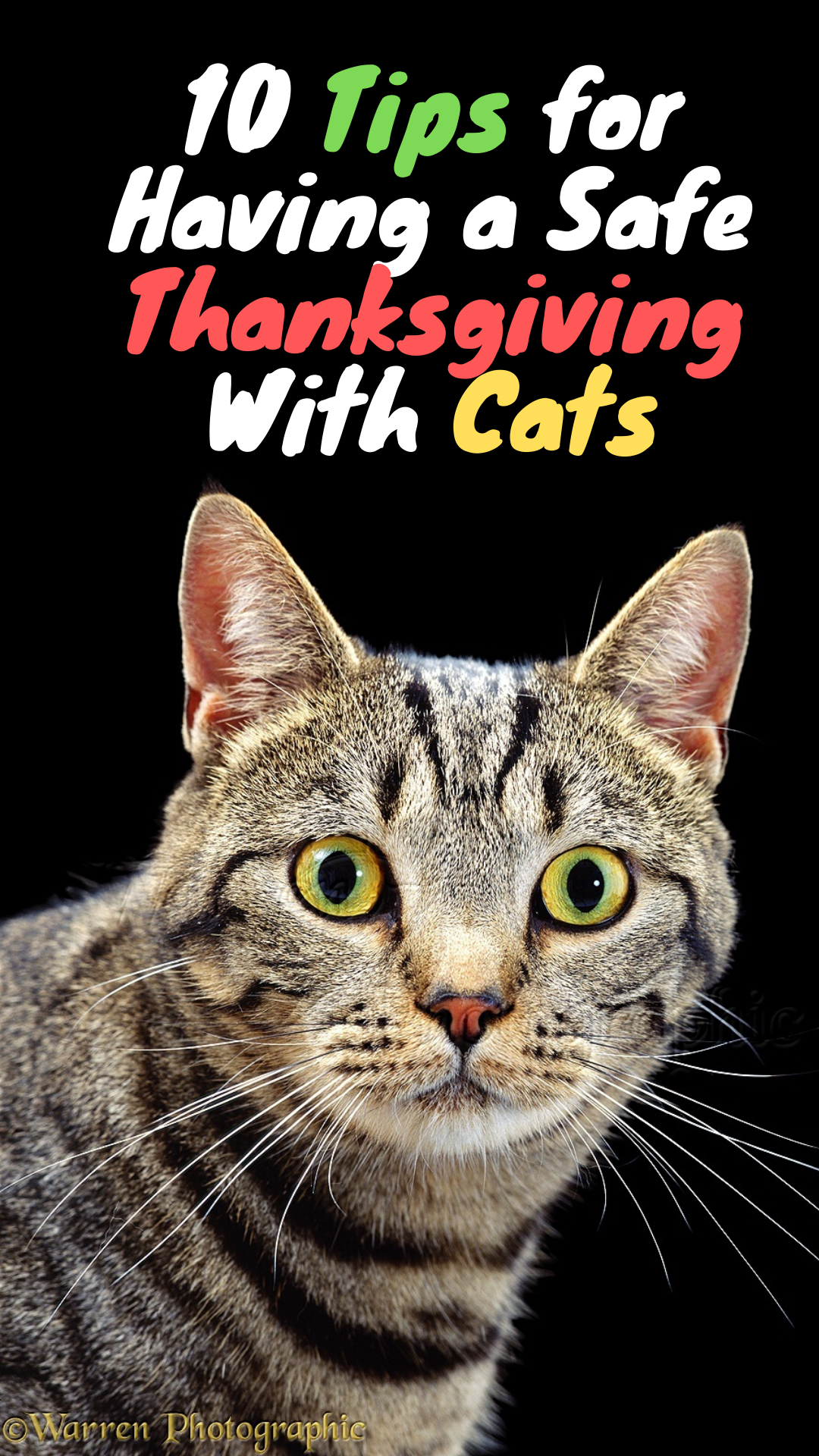 Thanksgiving Safety Tips for Cats Thanksgiving Safety Tips for Cats