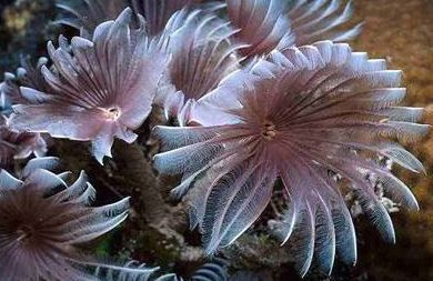 Feather Duster Worm Also Called Sea Feathers Shared By Better Gnomes And Caldrons Weird Sea Creatures Ocean Plants Ocean Animals