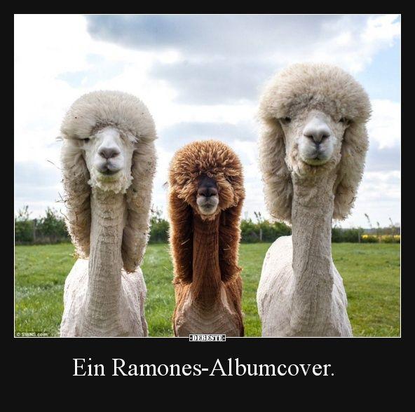 Ein Ramones Albumcover Alpaka Lustig Spruche Tiere Und Witzige