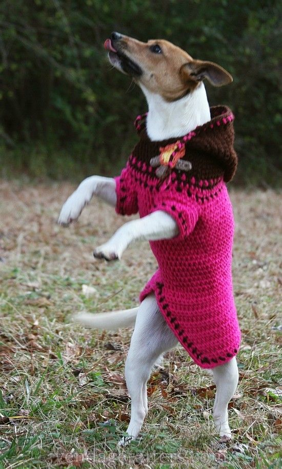 A Dog In A Sweater: Dog Hoodie~ free pattern | Dog Outfits ...