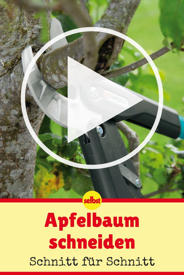Apfelbaum Schneiden Video Anleitungen Pinterest Apfelbaume