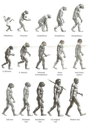 the various stages of mans evolution Human beings next evolutionary leap is going to take us beyond our biological  existence how do you feel about merging with an artificial.