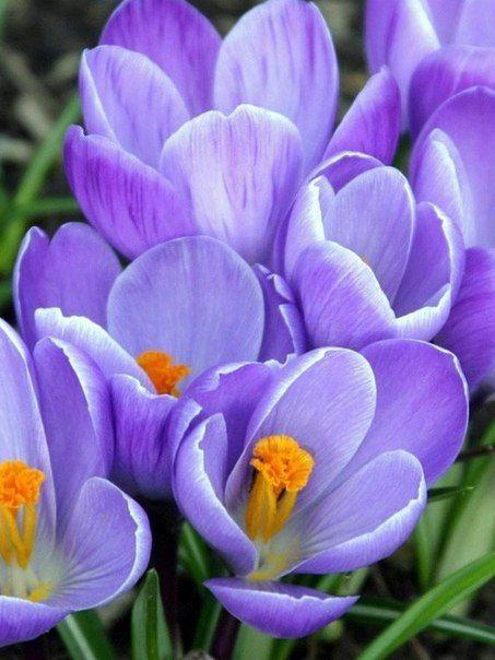 Пусть будет на душе у вас весна - всегда, в любое время года!
