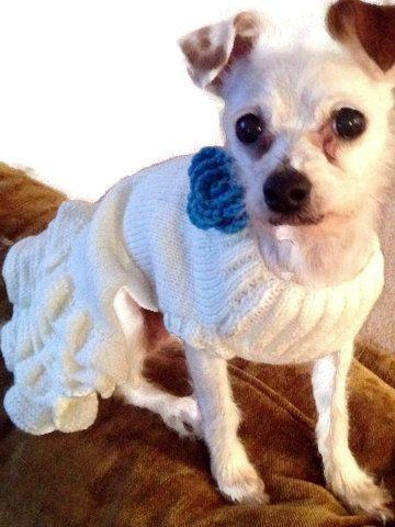 ropa para perros, vestido de perro. vestido de gato, con cinco