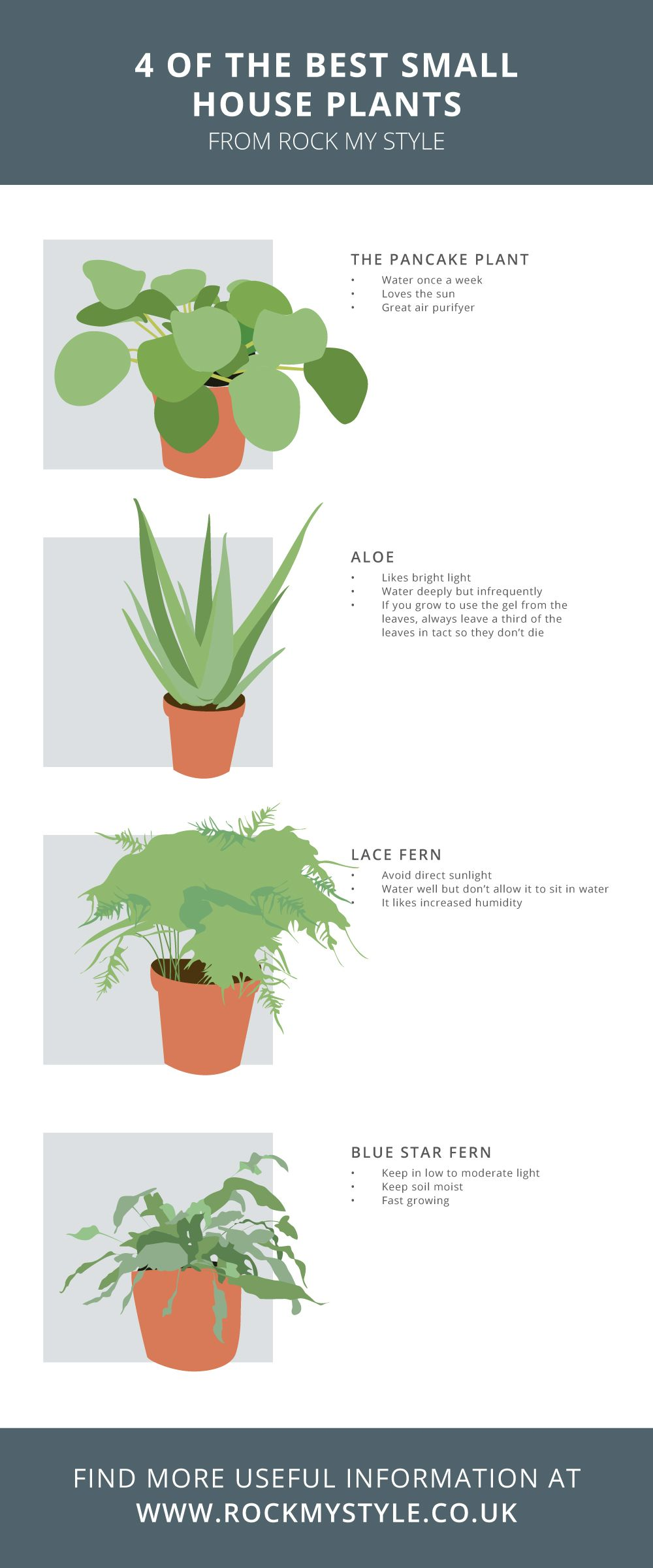 The Best Small House Plants