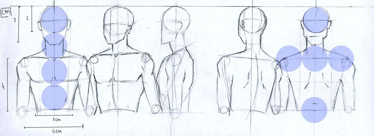 lucis7: Male anatomy proportions for head and torso. | Concept ...