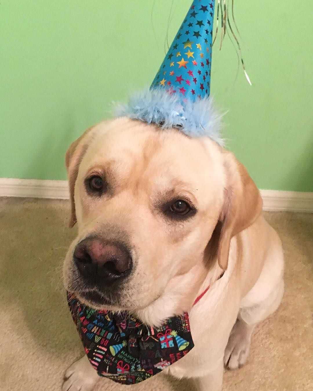 Thanks Furfriends For All The Birthday Wishes I Had A Pawsome First We Went To Starbucks Petsmart Beach And Dog Park Today