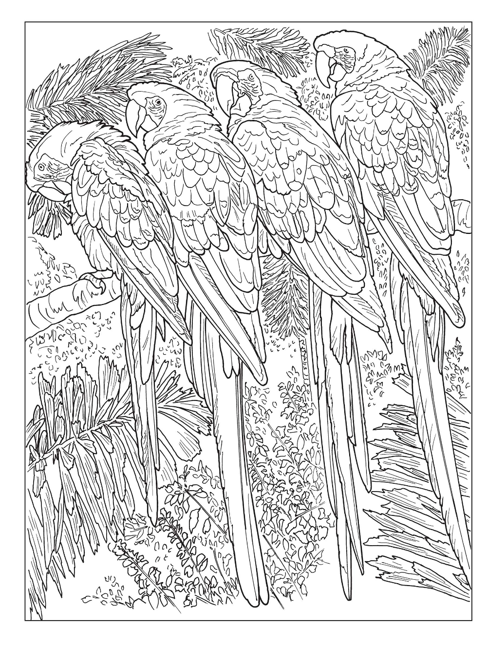 Amazon Com Creative Haven Beautiful Nature Designs Coloring Book Creative Haven Coloring Designs Coloring Books Creative Haven Coloring Books Coloring Books