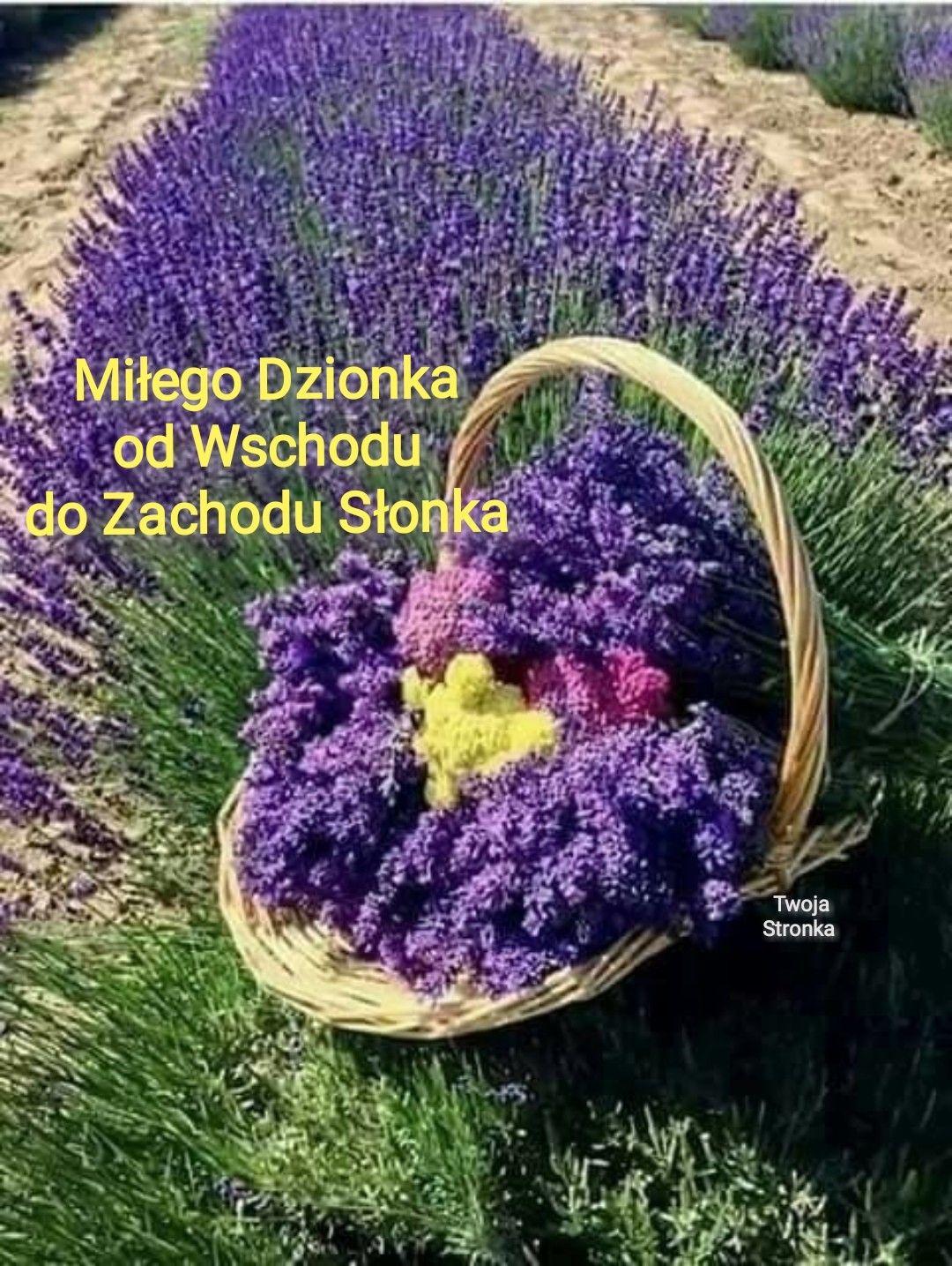 Pin By Halina Grycza On Dzien Dobry Purple Flowers Lavender Flowers Lavender Plant
