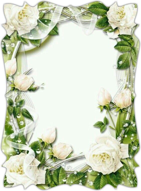 Pin By Sharon On Frames White Roses Rose Frame Flower Frame