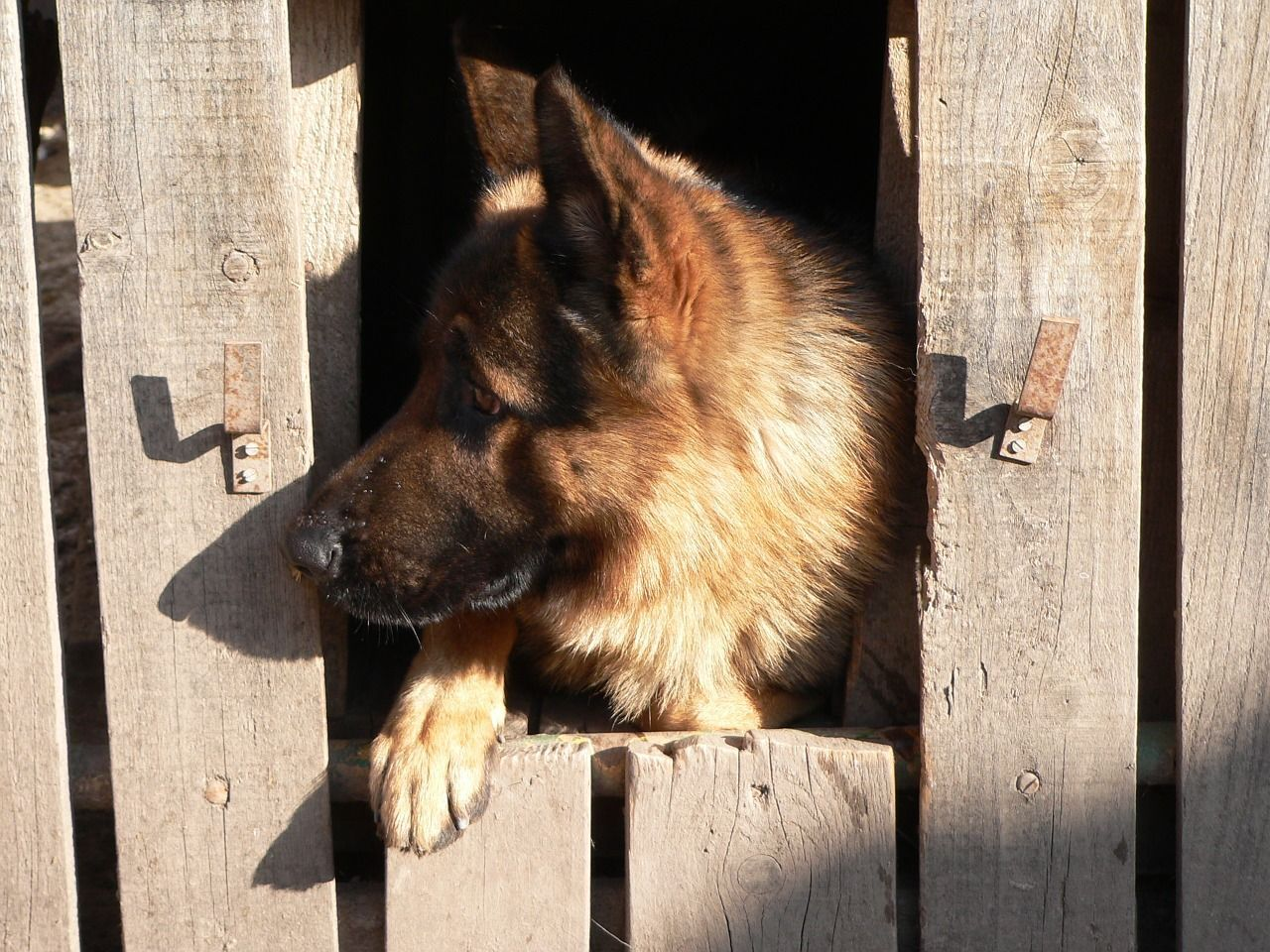 Crate Training German Shepherd Dog Puppy 4 Simple How To Steps