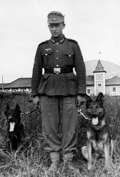 German soldier with two dogs. The dog on the left appears to have cropped ears. I was thinking that could be a Beauceron.