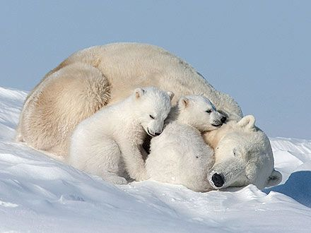 Snuggle Close!