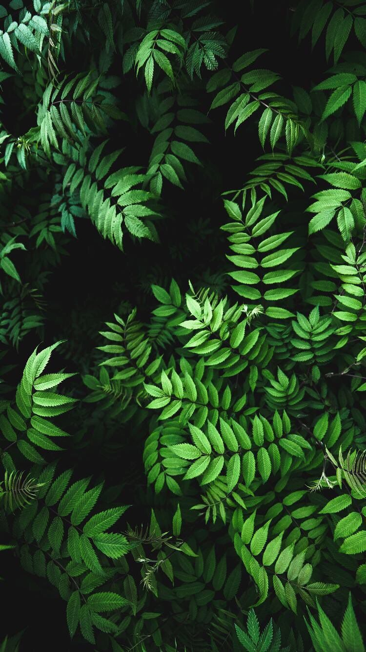 Iphone And Android Wallpapers Green Leaves Wallpaper For