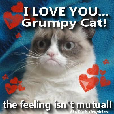 Honesty is a grumpy Cat policy.  Grumpy cat....we know you don't really mean it!