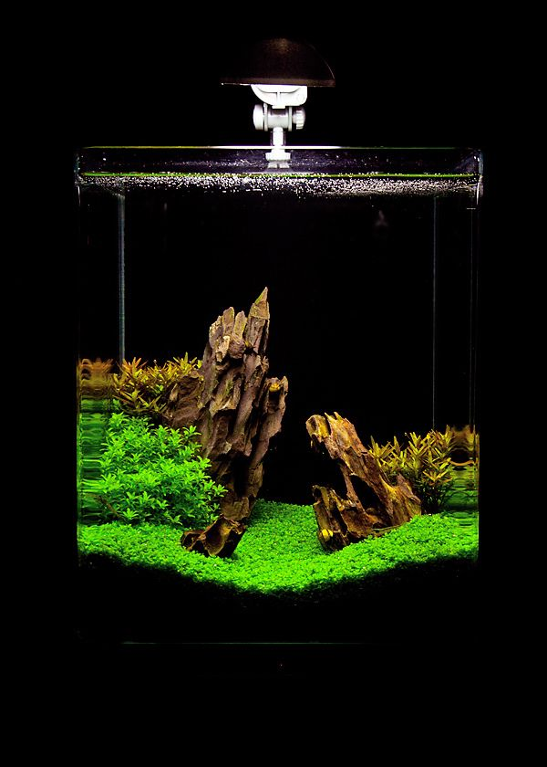 21 Best Aquascaping Design Ideas To Decor Your Aquarium